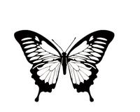 butterfly-471.jpg