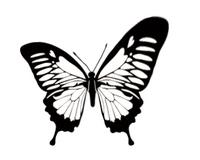 butterfly-472.jpg